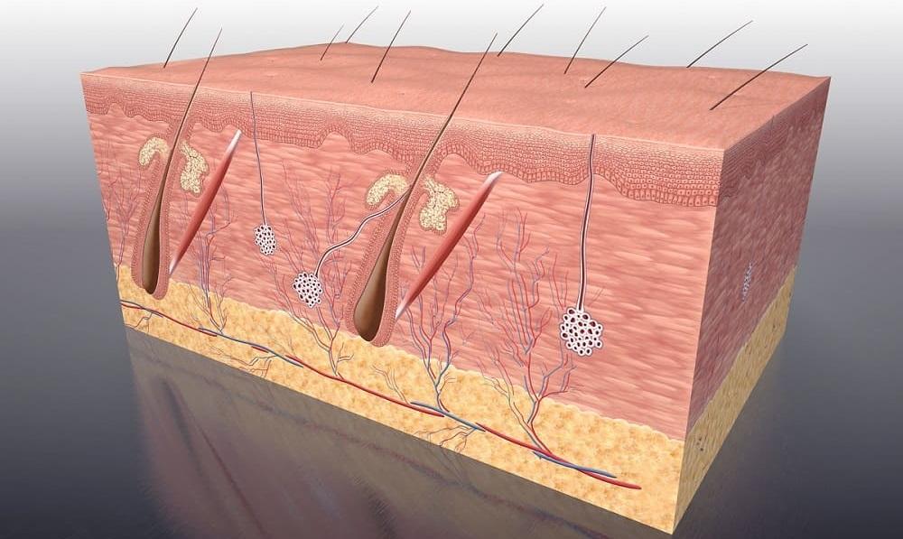 Können transplantierte Haarfollikel nach der Haartransplantation absterben?
